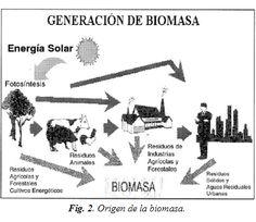 Recurso biomásico y fuentes de biomasa