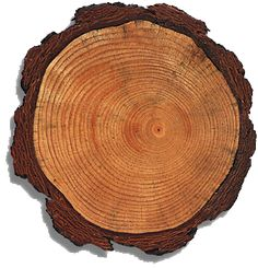 The rings of a tree give us a lot of information about the age of the tree, its health, and the climate conditions during each year of its growth.
