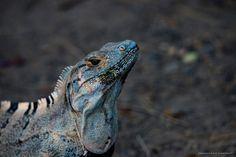 jguana colorato