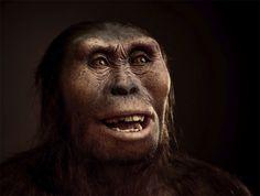 El esqueleto del australopithecus Lucy no era del todo homínido