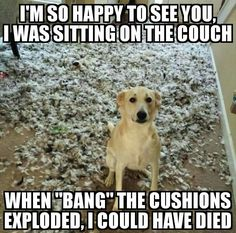 Funny animal quotes - Of The Happiest Dog Memes That Will Keep You Laughing For Hours dogmemes Funny Animal Jokes, Really Funny Memes, Stupid Funny Memes, Cute Funny Animals, Funny Relatable Memes, Cute Baby Animals, Funny Dogs, Cute Dog Memes, Hilarious Sayings