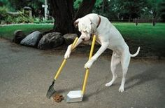 well trained dog ;-)