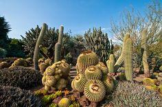 Huntington Desert Garden,Raymond