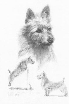 """Portrait by Cynthia Muir as a gift to our family of Int'l and AKC Ch. Dunham Lake Unanimous Decision """"Jake"""". Very special to us."""