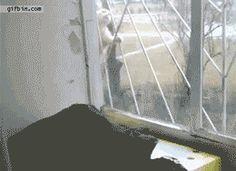 The fantastic spider cat!