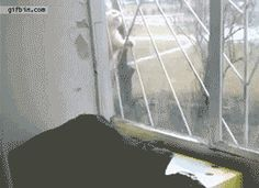Funny gifs of cats.