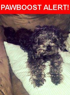 Please spread the word! Kingston was last seen in Staunton, IL 62088.    Nearest Address: Near Three Acre Ct & Staunton Rd