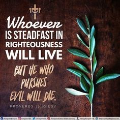 Whoever is steadfast in righteousness will live, but he who pursues evil will die. Proverbs 11:19 ESV