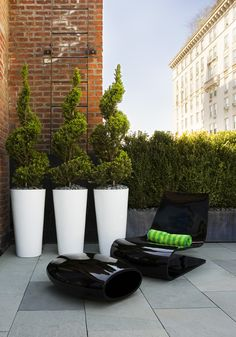 Beautiful Topiary in striking planters! If you would like to purchase such…