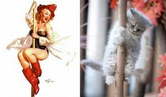 Adorable and Funny Cat Pin-Ups | Funny - BabaMail