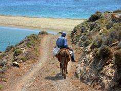 Seascape with man riding a donkey. A Donkey, Riding Mountain, Greek Islands, Portraits, More Photos, Europe, Mountains, Beautiful, Beach