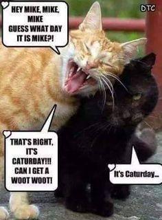 Caturday!!!