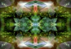 Organic Symmetrical Abstraction by Bernie Banks