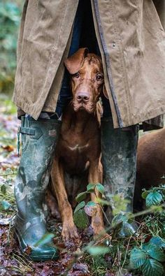 z- Vizsla Taking Shelter from Rain Beautiful Dogs, Animals Beautiful, I Love Dogs, Cute Dogs, Animals And Pets, Cute Animals, Hunting Dogs, Dog Photography, Dog Photos