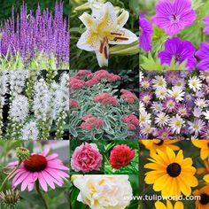 <p>A great perennial mix to start or add to a new flower bed! A mixture of colors; pink, white, purple, yellow, and orange. All flowers will multiply or get bushier over the years- filling in your entire planting bed.<br /><br /><u>All Season Blooms included:</u></p>  <p>For Early season blooms: Peony and Anemone<br />For MID season blooms: Coneflower, Liatris, Cransebill, Oriental Lily<br />For LATE Season blooms: Rudebeckia, Sedum</p>