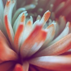 Orange Flower 2 2015 by elaurelphotography on Etsy