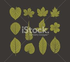 Hand drawn leafs autumn collection - Illustration