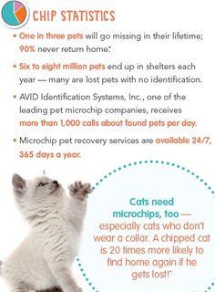 Pet Insurance Plans Pet Health Insurance From Petplan Pet Health Insurance Losing A Pet Pet Clinic