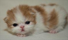 Cutie pie by Richard Ryan on 500px