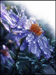 ~~Cold Blue by ~Callu~~