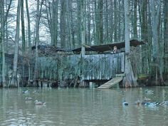 Tunica, Mississippi - Beaver Dam Duck Hunting and Bird Hunting at The Willows. My heritage! Hunting Cabin, Hunting Gear, Duck Hunting Blinds, Boat Blinds, Duck Season, Beaver Dam, Waterfowl Hunting, Ducks Unlimited, Duck Calls