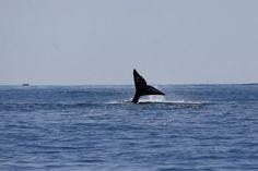 Winter whale watching week starts Sunday along the Oregon coast