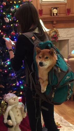 Backapcks and their most important use, carrying shibes