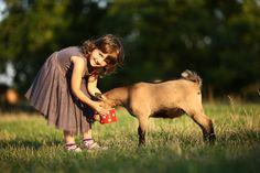 Penzion Za Mlýnem – Slup Cow, Chelsea, Animals, Animales, Animaux, Cattle, Animal, Animais, Chelsea Fc