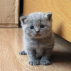 Silly Cat Pictures: Cutest Kittens ever