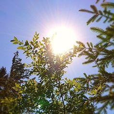 #Sunburst #Seattle #Summer #Photo