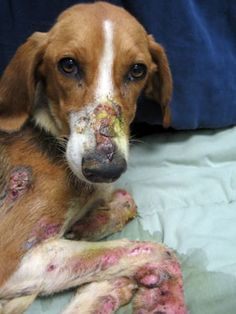 Animal Abuse, the savages that can do this, should have the same done to them. Be part of the solution, SPEAK OUT AGAINST ANIMAL ABUSE