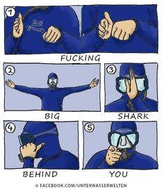 New Funny Pictures Hilarious Lol Humor Ideas Memes Humor, Funny Humor, Sarcasm Meme, Scuba Diving Quotes, Scuba Diving Gear, Best Scuba Diving, Diving Suit, Diving School, Big Shark
