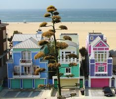 "The Strand, Manhattan Beach, California (ocean front homes behind man-made sand barrier ... house in purple & pink is owned by the designer of ""Barbie"")"