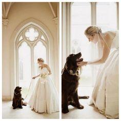 Wedding Dog - Anne Barge bride wearing style Jacqueline.