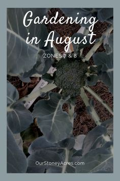August is a great time to start planting in your garden! Don't believe me? Trust me, you can still start your garden this month! #gardening #vegetablegardening #backyardgardening