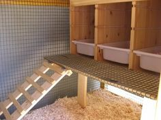 Raising Chickens: Avoid These Deadly Mistakes When Raising Chickens From Home