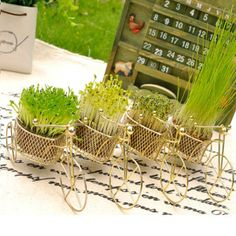 Love Bike Green Indoor Potted Plants Radiation Protection Plants