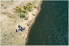 Aerial view of crocodile and hippos sunbathing in Mana Pools National Park in Zimbabwe