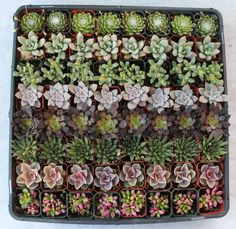 Gorgeous SUCCULENT WEDDING COLLECTION succulents plant party favors gifts  ebay