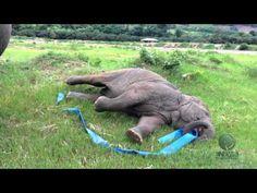 l'elefante giocherellone!