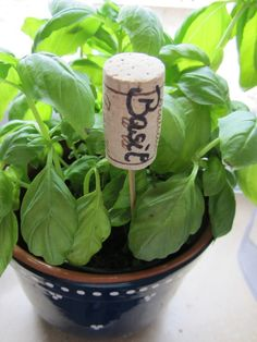 Basil is a MUST for the kitchen...how else do you make fresh pesto?