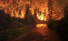 Ft. Collins forest fire, deer