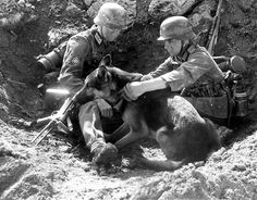 A German Shepard field dog. Used to find enemy soldiers & carrying supplies in combat.
