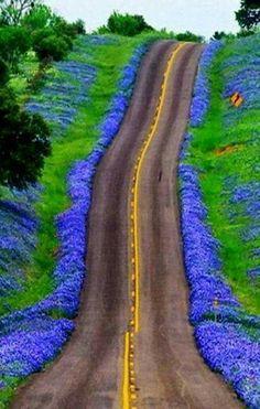 Texas Bluebonnets Highway USA