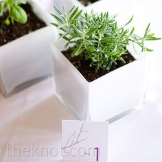 This is exactly what I want for centerpieces - low, white containers planted with a variety of herbs. Plus, it's eco-friendly!