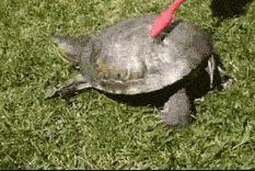 New trending GIF on Giphy. turtle brush brushing. Follow Me CooliPhone6Case on Twitter Facebook Google Instagram LinkedIn Blogger Tumblr Youtube