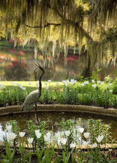 Relaxing pond in the garden