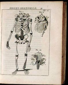 Spicilegium Anatomicum (https://pinterest.com/pin/287386019946881224/). Theodor Kerckring  (https://pinterest.com/pin/287386019946881237/). Tab. IX.