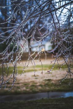 Tiny Winter Icicles Dance on the Tree.  As we leave the gazebo and head home we can not help but notice the beautiful icicles hanging from the tree branches.  Of course, we had to get closer and take a look at how pretty it is.  If you just joined us and missed any of my photo story of last weekend's ice storm please head back to my feed and check out the last 4 photos.  As with the previous photos, I photographed this scene on #lexarmemory using my #Lensbaby Edge 80 lens.