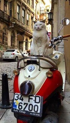 「運転手はまだかにゃ」I don't understand this, but it probably says, my humble servant will take me home on my splendidly stylish cat-mobile, lol!